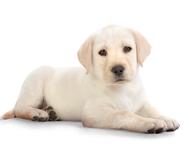 afspraak inenten pups